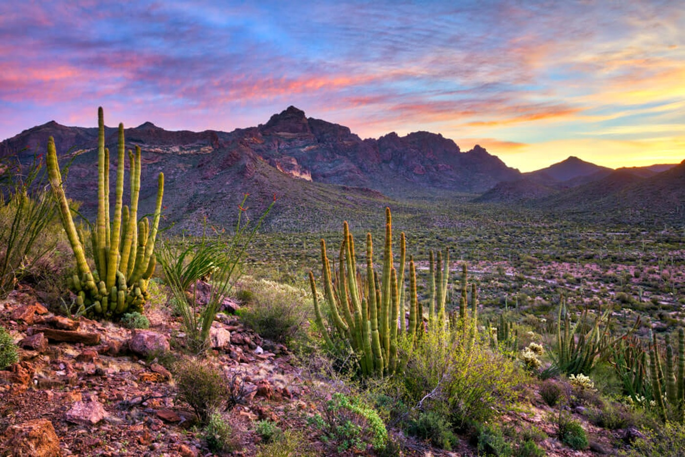 Organ Pipe Cactus National Monument|Stock Photo