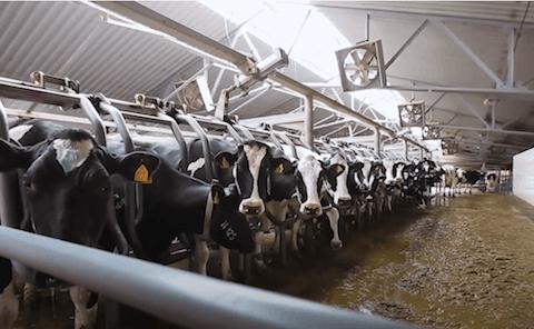 arizona dairy farmers