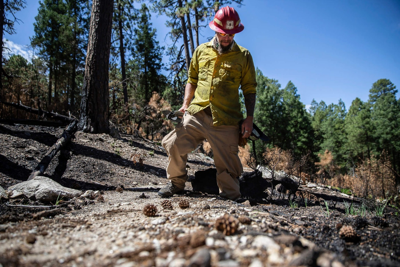 Gregg Sasek, dispersed recreation manager for the Coronado National Forest Santa Catalina Ranger District, demonstrates how ground along the Palisade Trail has been burnt out making it easy for hikers to sink a leg into the soil, on Wednesday, Aug. 12, 2020, near Tucson, Ariz. Various dangers are still being accessed throughout the Coronado National Forest as a result of the Bighorn Fire. (Josh Galemore/Arizona Daily Star via AP, Pool)