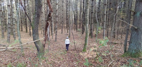 Practicing what she preaches, NC's Margot Rossi wanders in the NC woods. (Image submitted by Rossi)