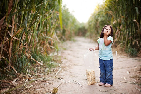 A toddler girl enjoys a bag of popcorn while in a corn maze field. Image via Getty Images.