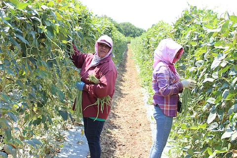 Female-workers-are-feedinhg-their-families-with-their-hardwork