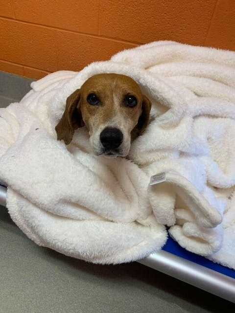 Adoptable dog S'mores bundles up for a chilly winter season. Contributed photo.