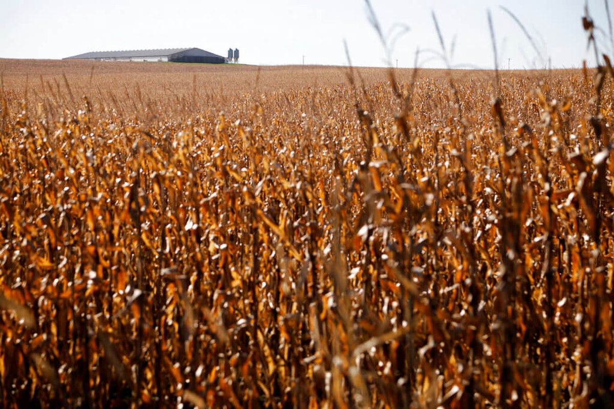 Farm in Estherville, Iowa (AP Photo/Charlie Neibergall)
