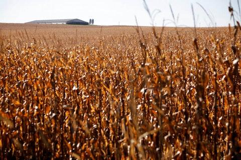 Farm in Estherville, Iowa (AP Photo/Charlie Neibergall)