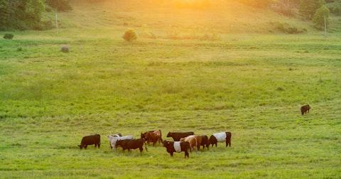 Cows graze at a farm near Blanchardville. (Photo © Andy Manis)