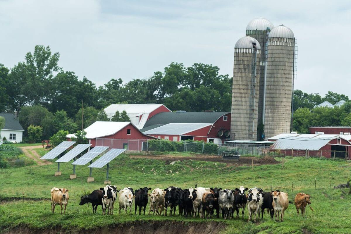 The Placke Farm in Lafayette County is one of 400 farms that belong to the Organic Valley cooperative in Wisconsin. (Photo provided by Placke Farm)