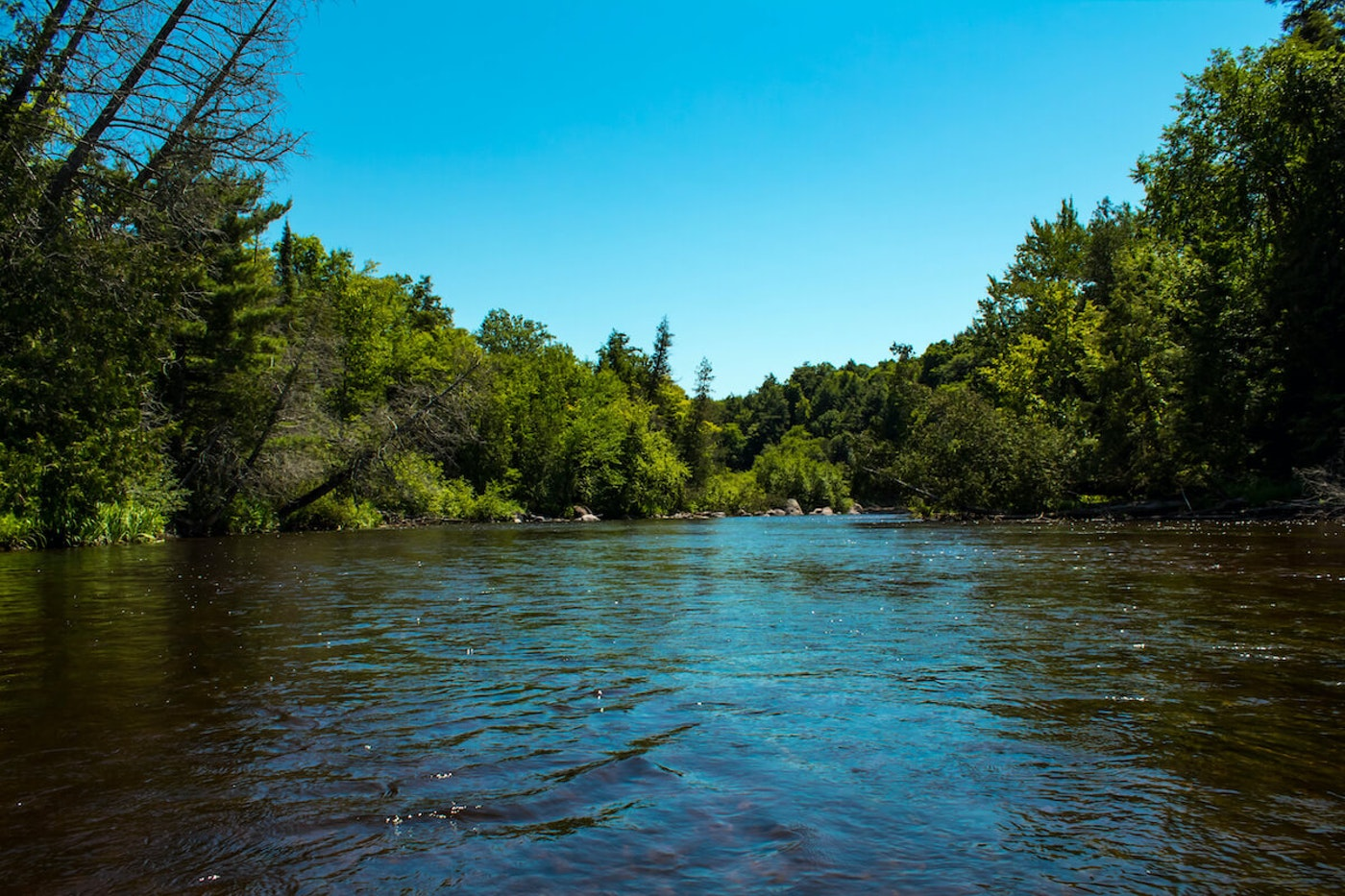 Wisconsin's Wolf River (Image via Shutterstock)