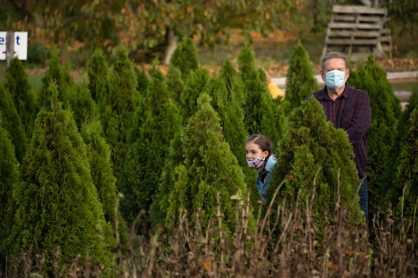 People wear face masks while walking between Christmas trees at Alstede Farms on October 24, 2020 in Chester Township, New Jersey. Many Halloween events have been canceled or adjusted with additional safety measures due to the ongoing coronavirus (COVID-19) pandemic. (Photo by Noam Galai/Getty Images)
