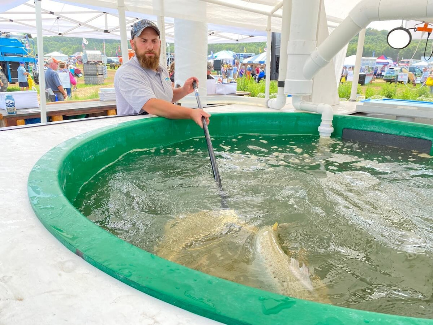 Eric Brandt, assistant aquaculture manager for Superior Fresh, lifts two Atlantic salmon from a pool at the company's exhibit at Wisconsin Farm Technology Days in Eau Claire County. Superior Fresh, a business near Hixton that raises organic greens and Atlantic salmon, is among agriculture operations in Wisconsin that are using environmentally friendly practices to produce products. (Photo by Julian Emerson)