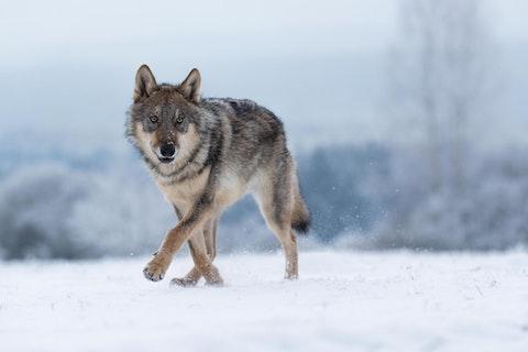 (Photo via Shutterstock)