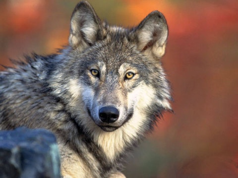 (Photo by Gary Kramer/US Fish and Wildlife Service)
