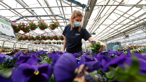 Madison Phillips works at replacing plants for sale at Ray Wiegand's Nursery in Macomb, Mich., Monday, April 27, 2020. (AP Photo/Paul Sancya)