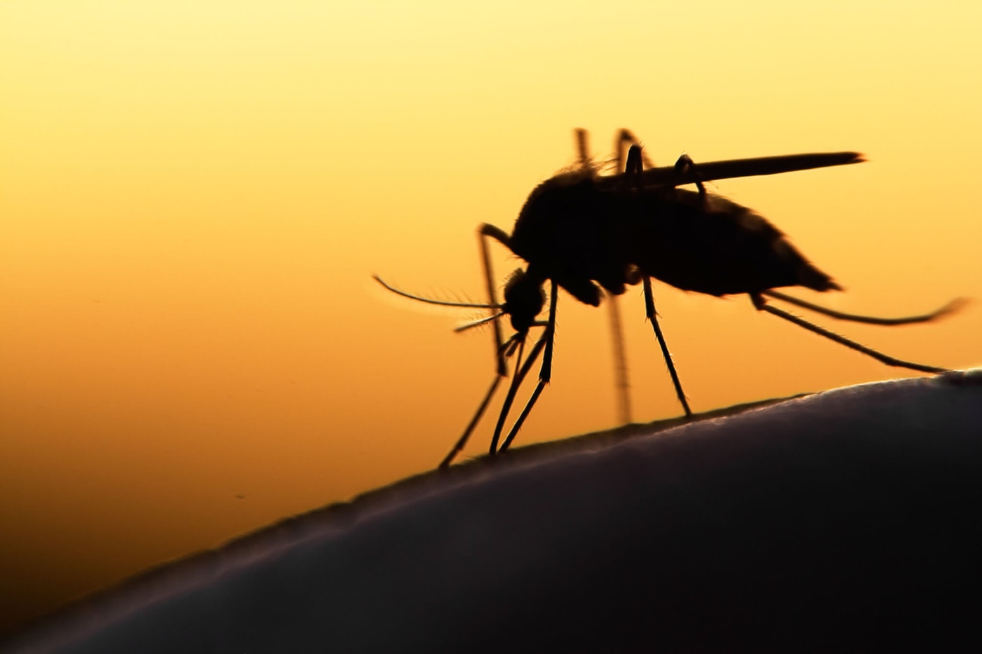 Michiganders will need to add mosquitos to the growing list of potentially harmful environmental factors to avoid this summer. Photo via Shutterstock.