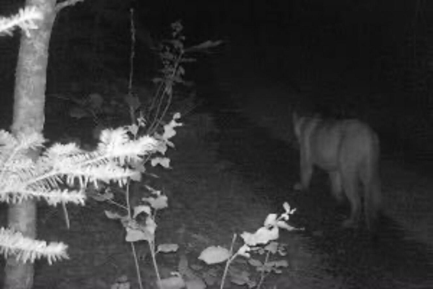 Photo via Michigan Department of Natural Resources