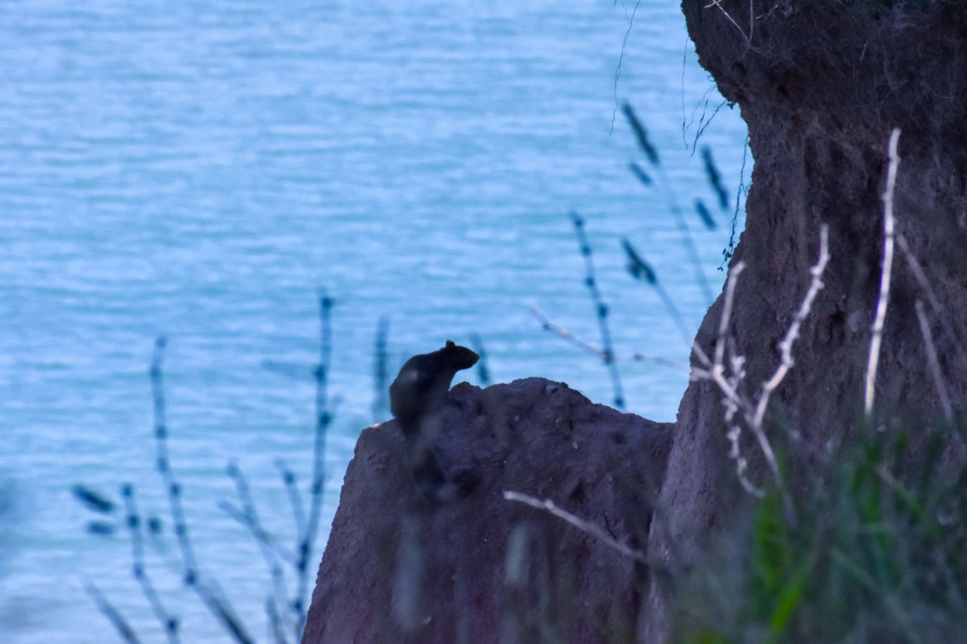 A squirrel on a rocky cliff edge overlooking Lake Michigan