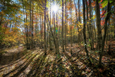 Morning sun burst on a trail in the fall woods in Roscommon State Forest Michigan. (Shutterstock)