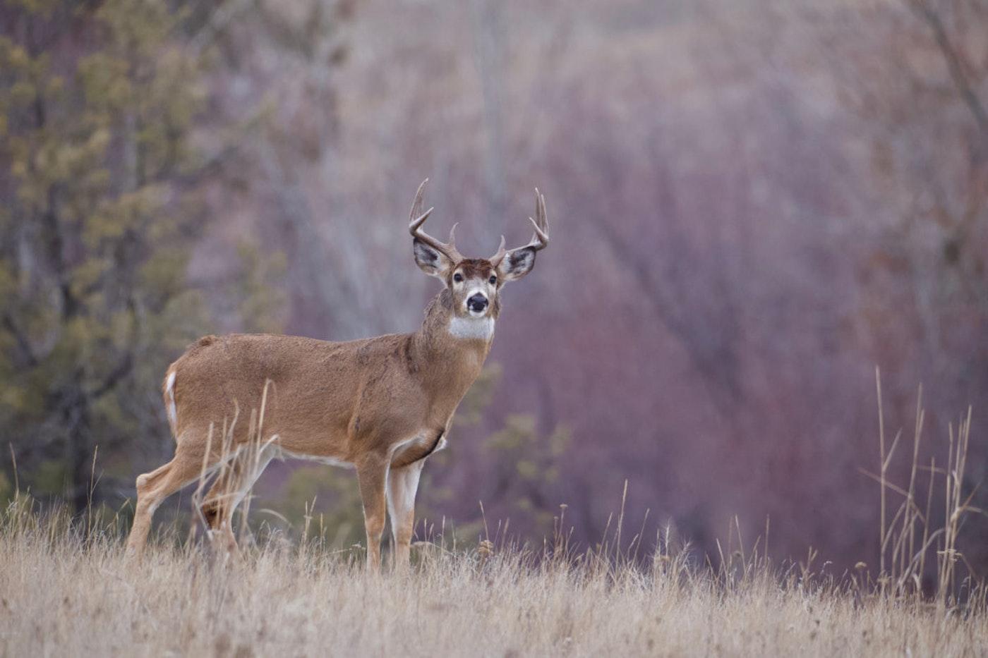 Hunting season is here.