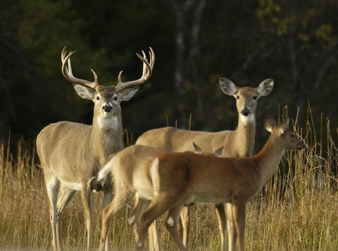 The Michigan DNR says it expects deer hunting season to be bigger than it was last year.