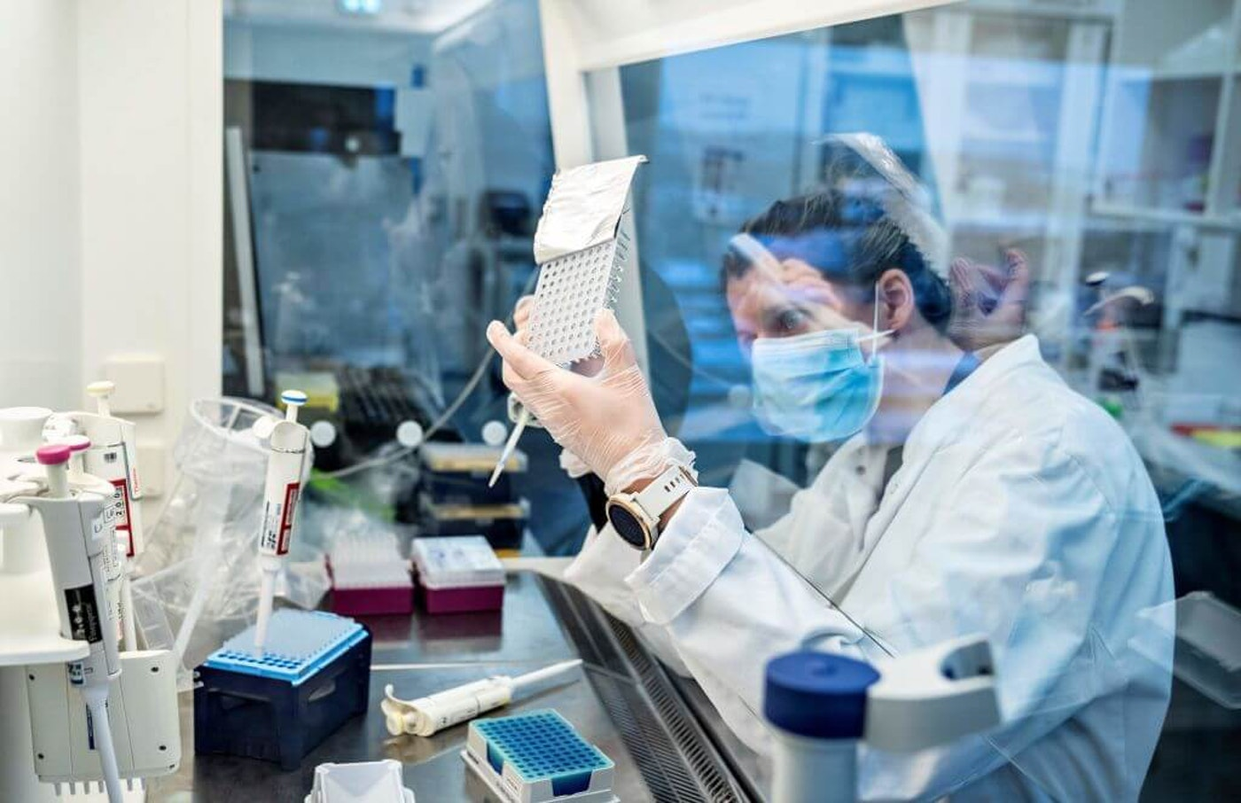 A researcher at Aalborg University looks at samples from behind a safety screen during the screening and analysis of all positive Danish coronavirus samples for the virus variant cluster B117 from the United Kingdom, in Aalborg, Denmark on January 15, 2021, during the ongoing novel coronavirus (Covid-19) pandemic. - The B117 coronavirus strain, which emerged in Britain late last year, has been shown to be between 40 and 70 percent more contagious than variants which have spread previously.
