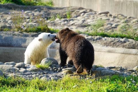 Photo Credit Detroit Zoo